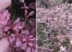 flori-de-toamna-berberis