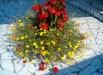 flori-gradina