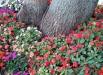 flori-in-gradina