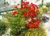 ghivece-flori-gradina