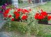 ornamente-florale-gradina