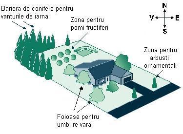 plan copaci gradina