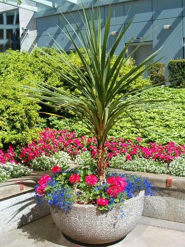 idei de ornamamte florale pentru gradina