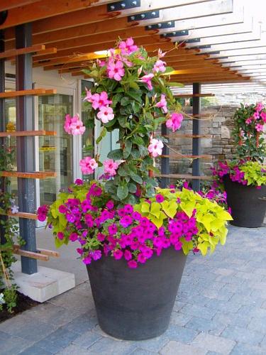 ornamente flori de gradina