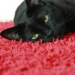 Amenajarea casei in caz de pisici