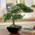 Beautiful-BOnsai-Tree-at-Living-Room