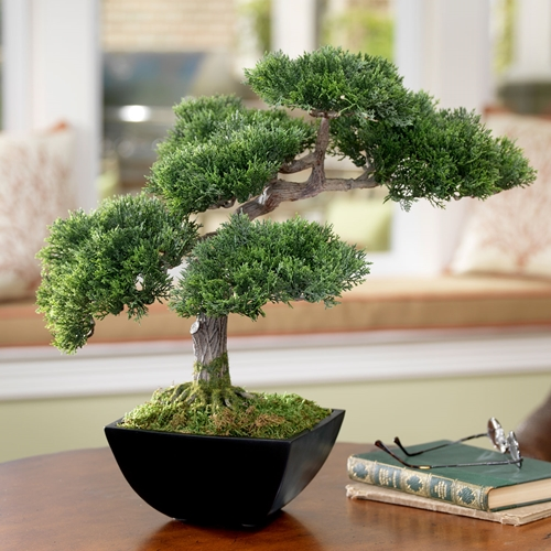 Beautiful-BOnsai-Tree-at-Living-Room