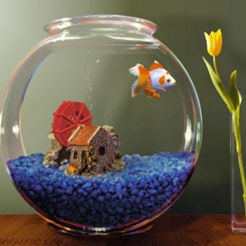 small-and-beautiful-aquarium-round-shaped-small-aquariums-bathroom-ideas-aquarium-aquariums.com-round-aquarium-round-fish-tank-small-small-aquarium-small-aquariums-small-fish-tank-small-fish