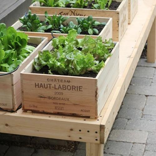 plante-balcon