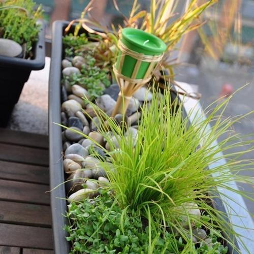 plante-comestibile-balcon-gradina