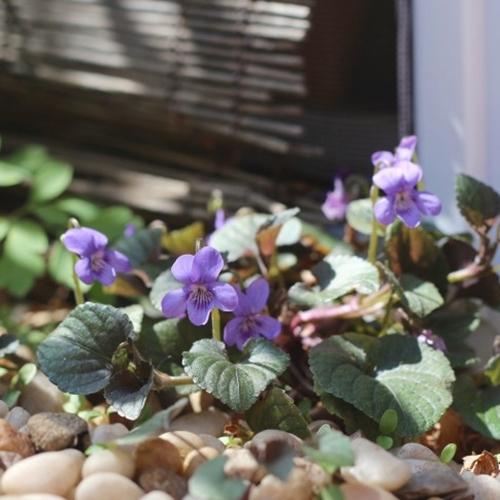 pietre-plante-balcon