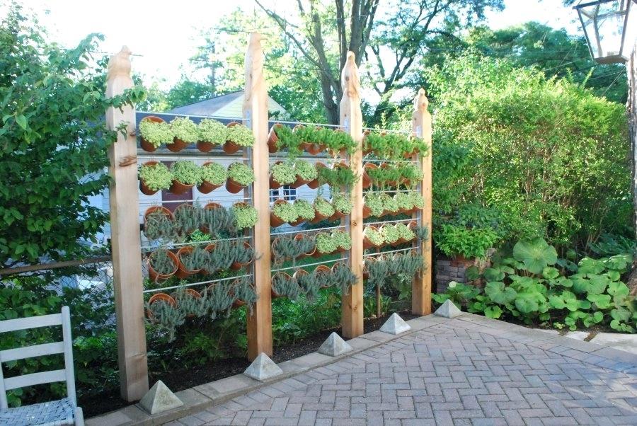 amenajari gradina legume